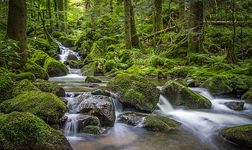 Bach durch Wald