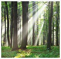 Wald mit einfalenden Sonnenstrahlen